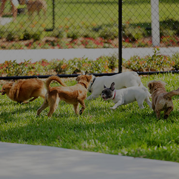 Large Dog Park at Village Park Apartments